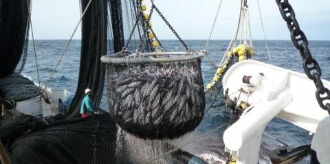 Proyecto FEP pesquerías atún